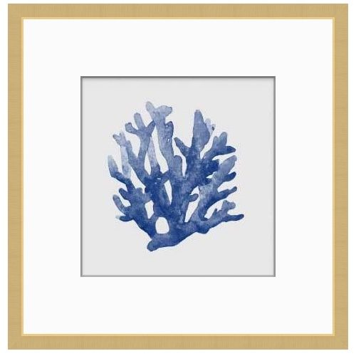 Blue Coral 1