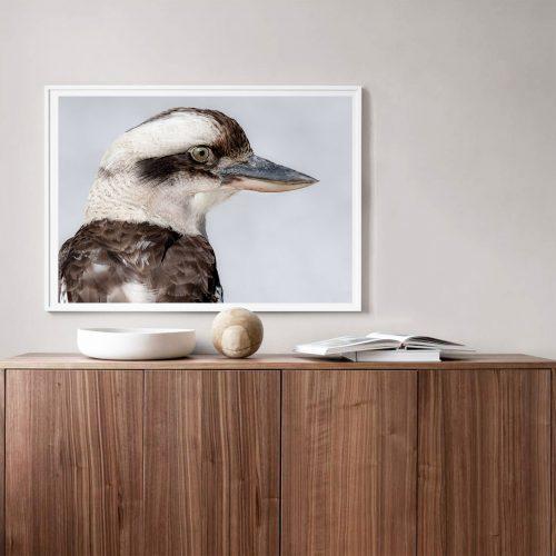 Kookaburra Styled